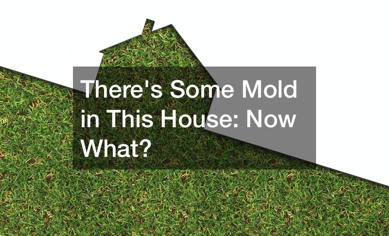 Theres Some Mold in This House: Now What?