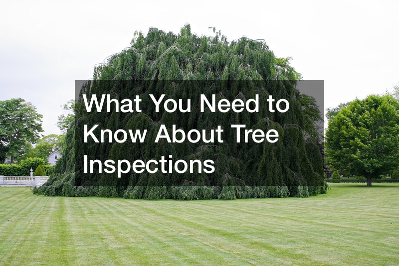 What You Need to Know About Tree Inspections