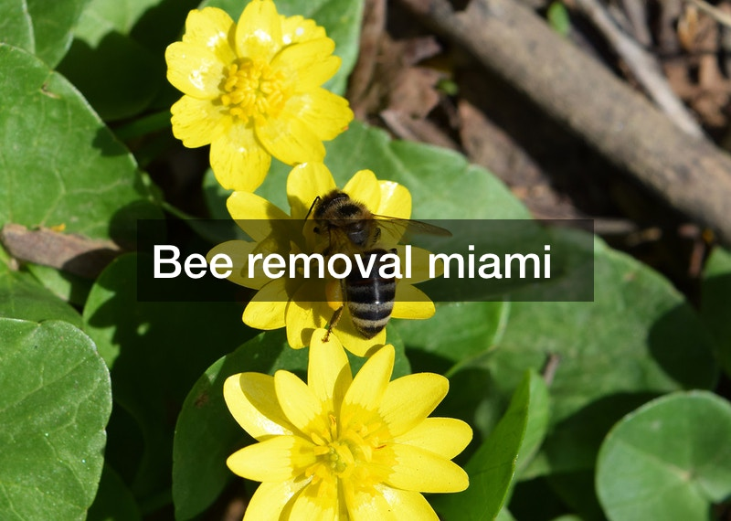 Bee removal miami —- [FREE VIDEO]