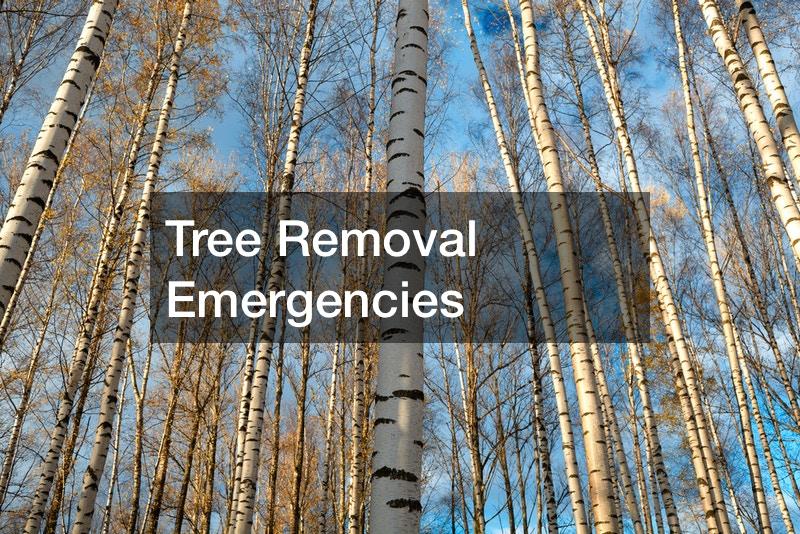 Tree Removal Emergencies