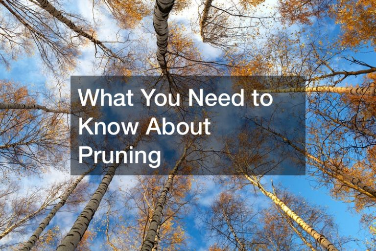 What You Need to Know About Pruning